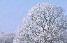 m_winter